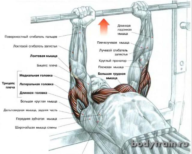zhim-lezha-uzkim-hvatom-anatomija