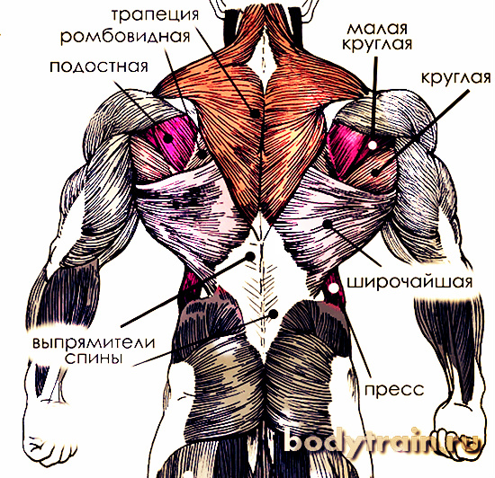 Как тренировать спину