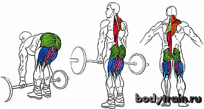 Мертвая тяга анатомия