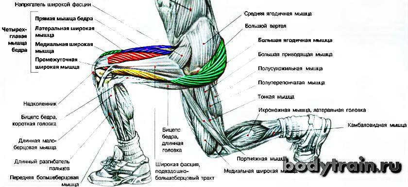 Анатомия выпадов
