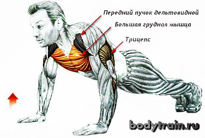 Анатомия отжиманий