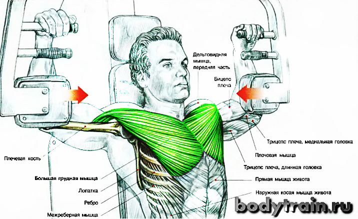 anatomiya-uprazhneniya