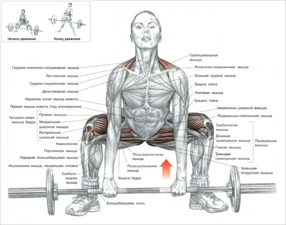 Какие мышцы задействованы во время выполнения?