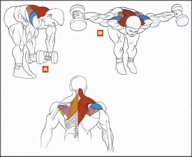 Работа мышц во время выполнения упражнения