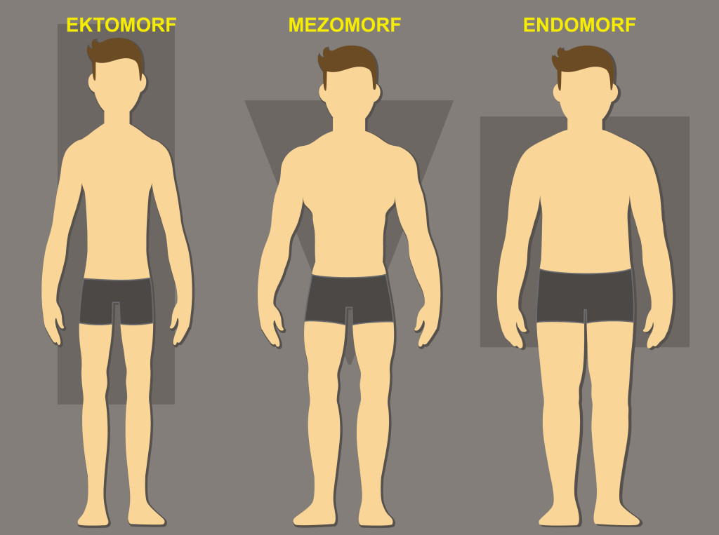 types of somatotypes The 3 body types explained: ectomorph, mesomorph, and endomorph so you want to know what the three body types are and how you can find out which one applies to you.