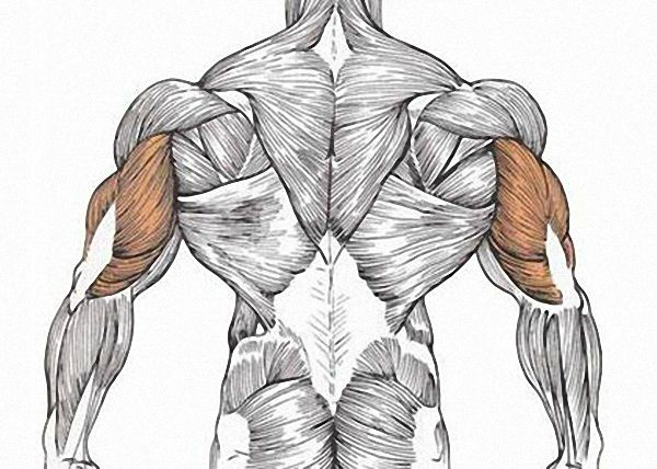 uprazhneniya-na-triceps