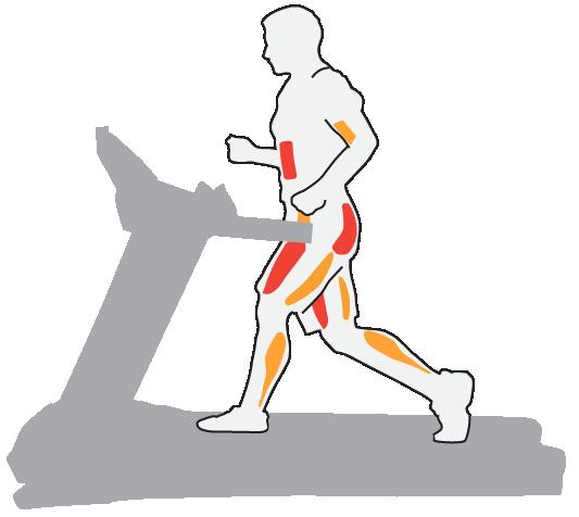 Работа мышц во время бега на дорошке