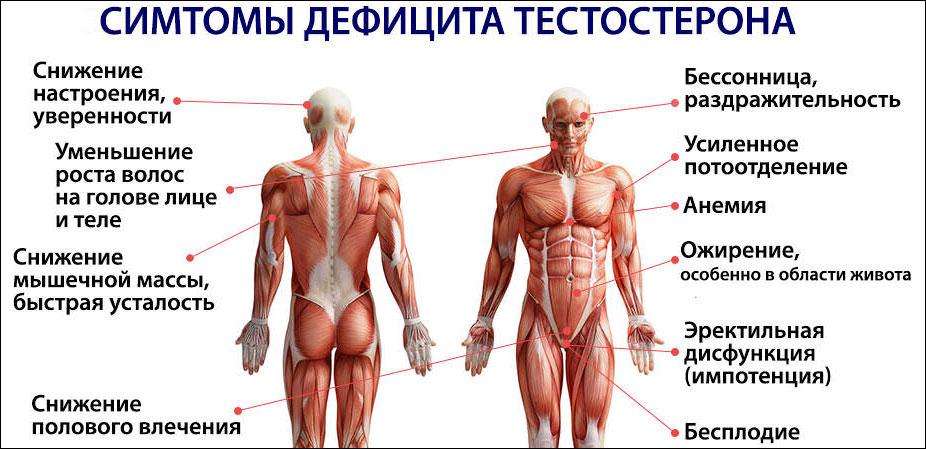 Симптомы низкого тестостерона у мужчин и нервная система