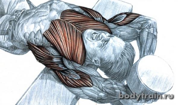 Пуловер мышцы работающие в упражнении