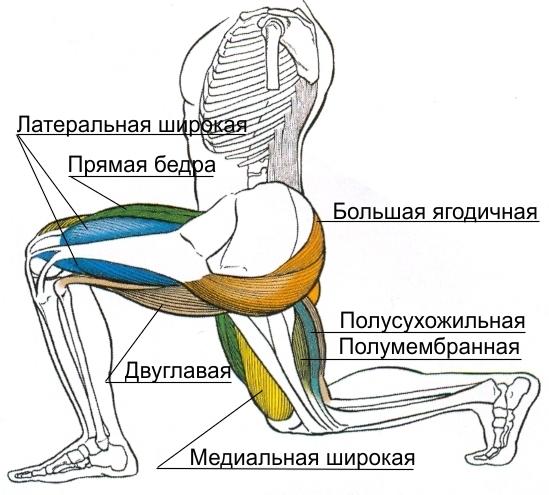 Выпады с гантелями мышцы