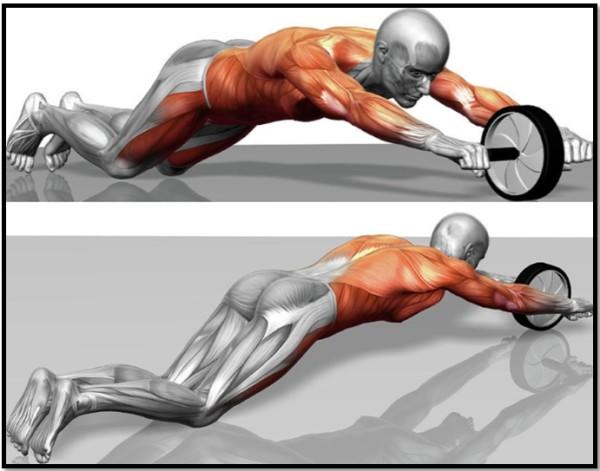 Работа мышц во время упражнения