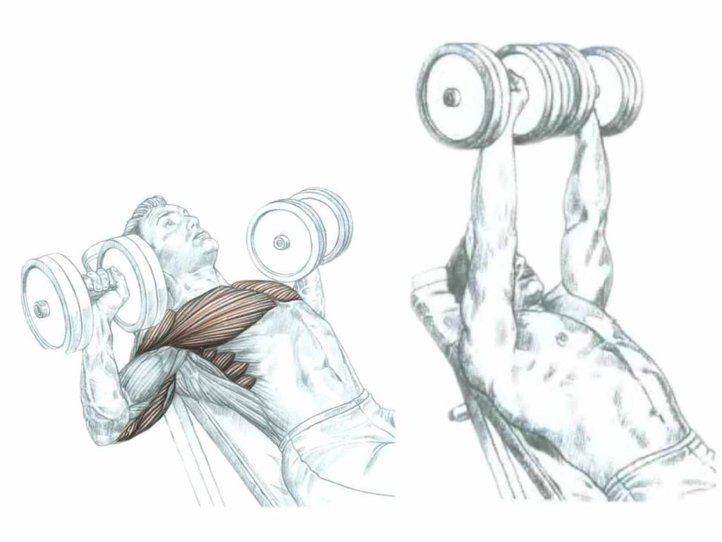 Работа мышц во время жима с гантелями