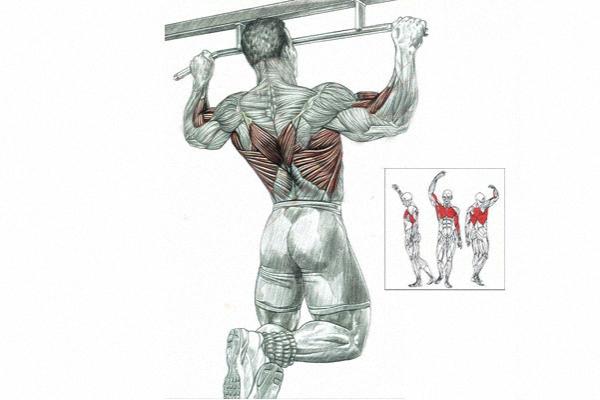 Мышцы работающие при подтягивании