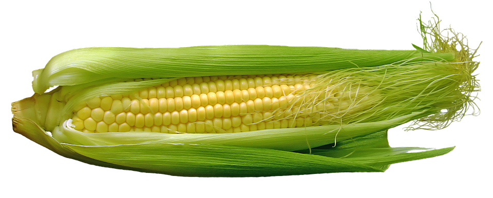 polza varenoj kukuruzy