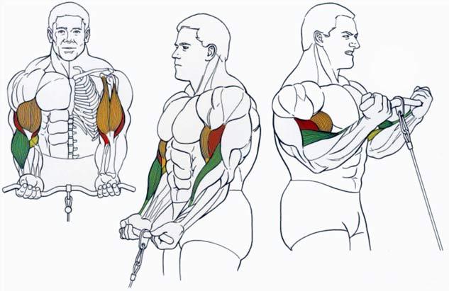 biceps-na-blocke