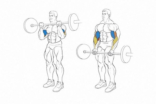 Uprazhnenija na biceps