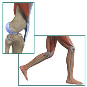 hrustjat-koleni