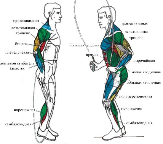 Мышцы которые работают